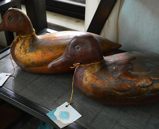EC Golden Birds
